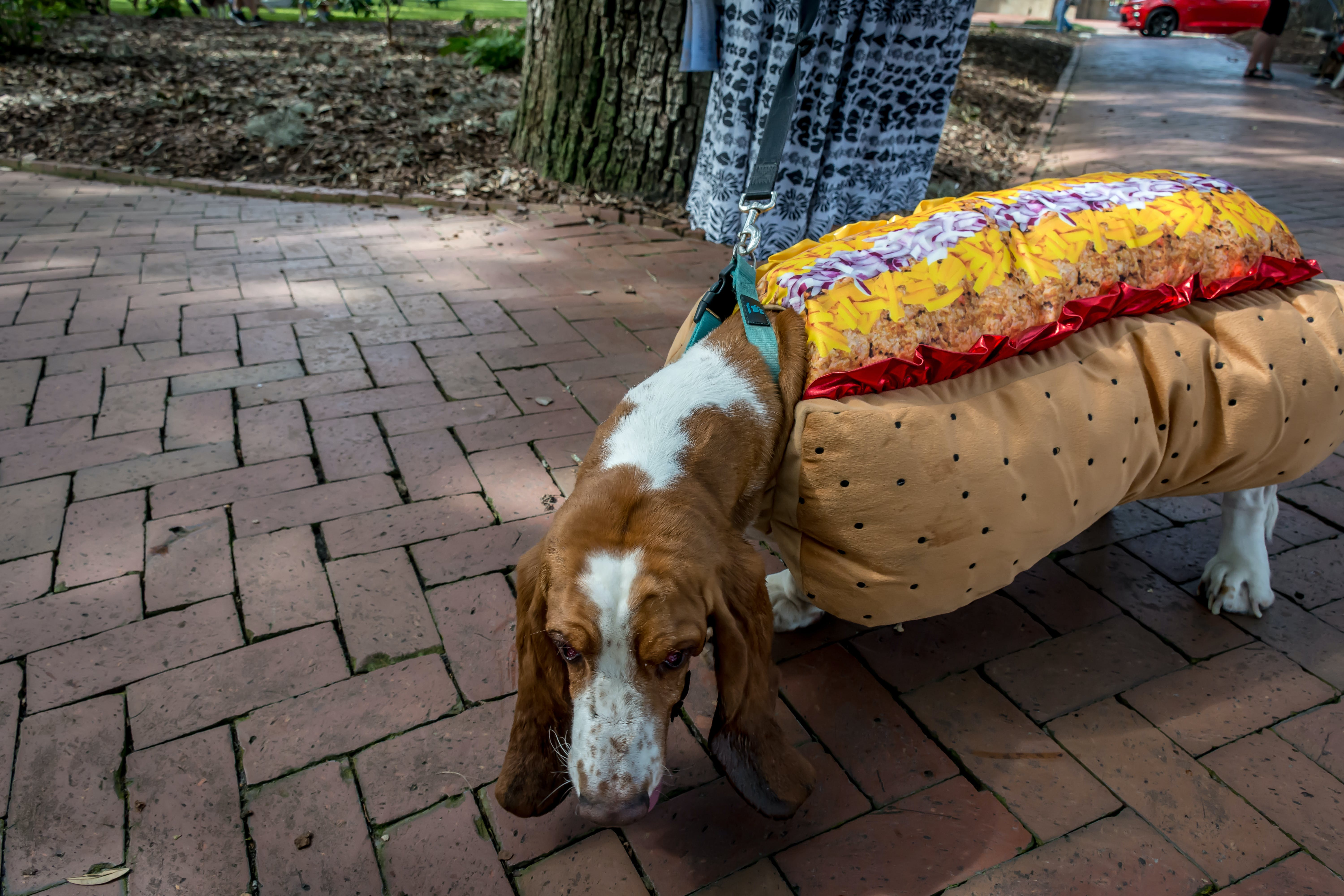 Jerry's costume story for 10 Dog Halloween Costume Ideas for Basset Hounds
