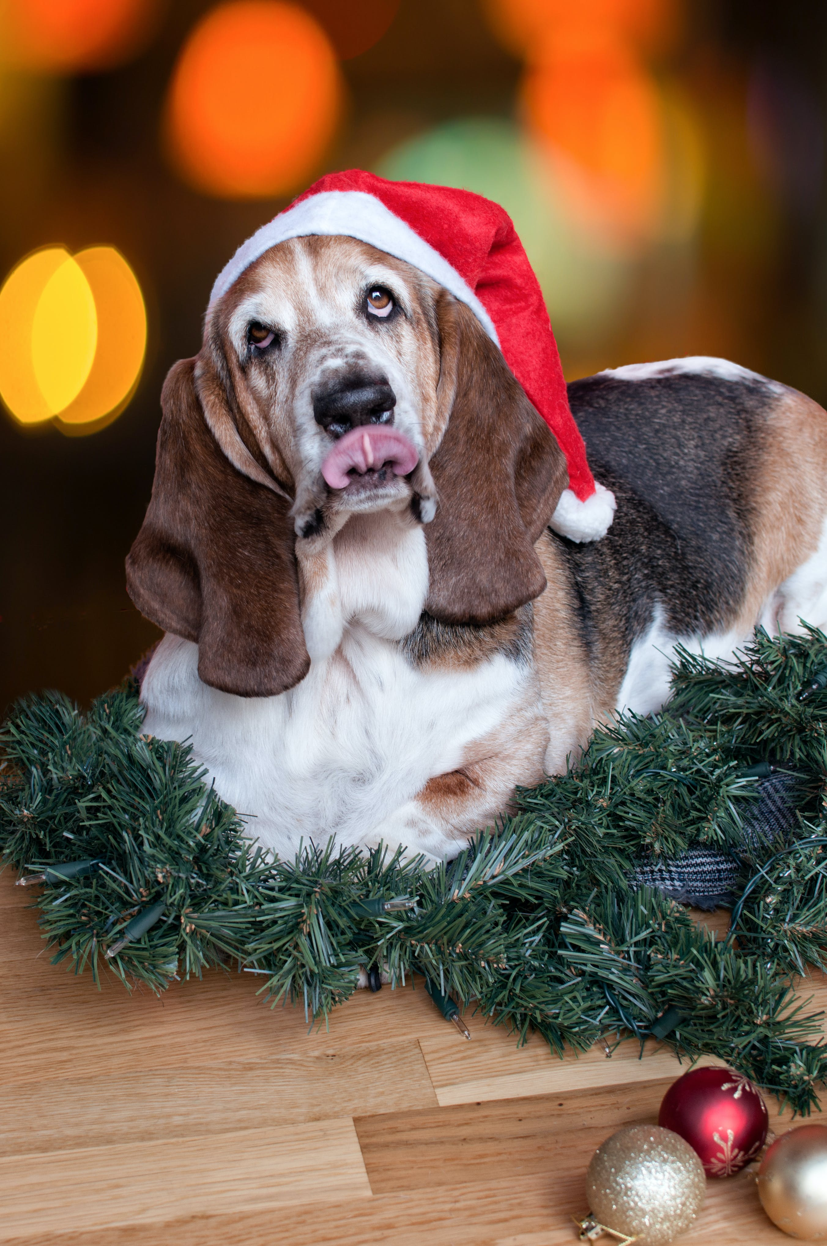 Miranda's costume story for 10 Dog Halloween Costume Ideas for Basset Hounds