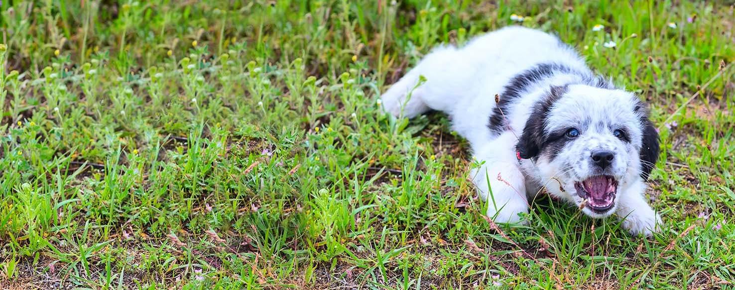 How To Train A Puppy To Bark At Strangers Wag,Indoor Kitchen Garden Ideas