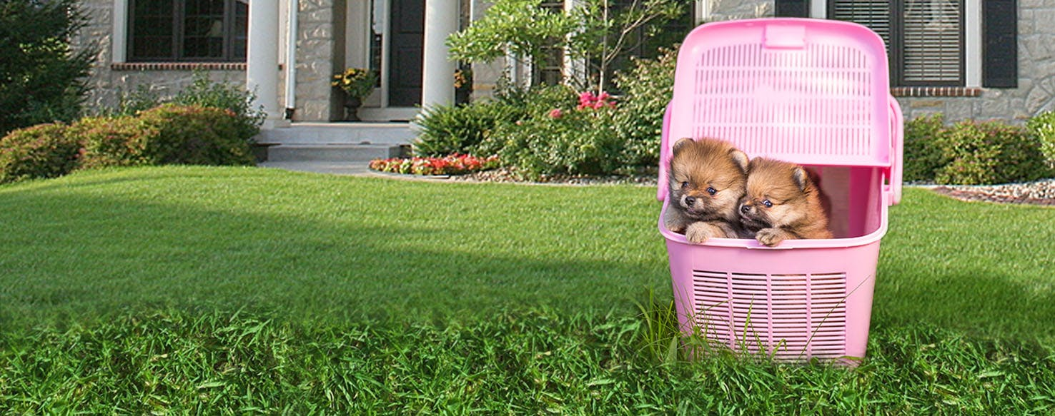 how to train a pomeranian how to train a pomeranian puppy to use a litter box 9484