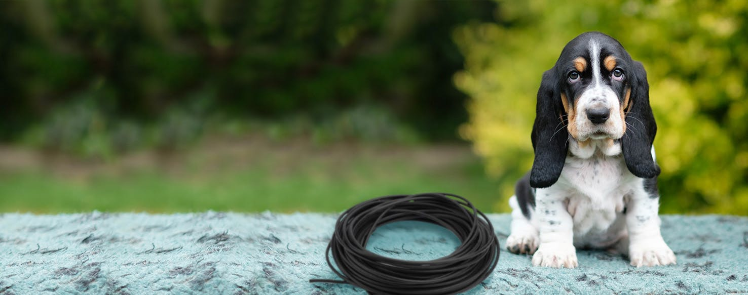 How to Train a Puppy to Not Chew on Electrical Wires