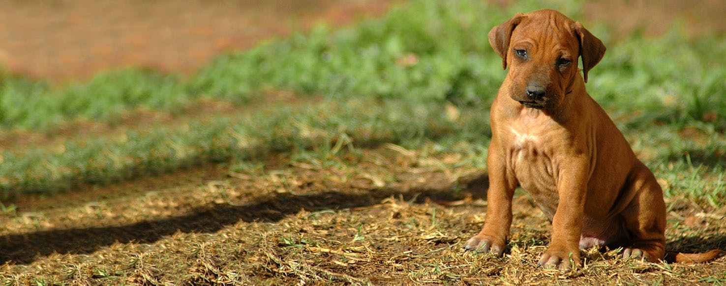 How To Train A Puppy To Stop Barking At Strangers Wag,Indoor Kitchen Garden Ideas
