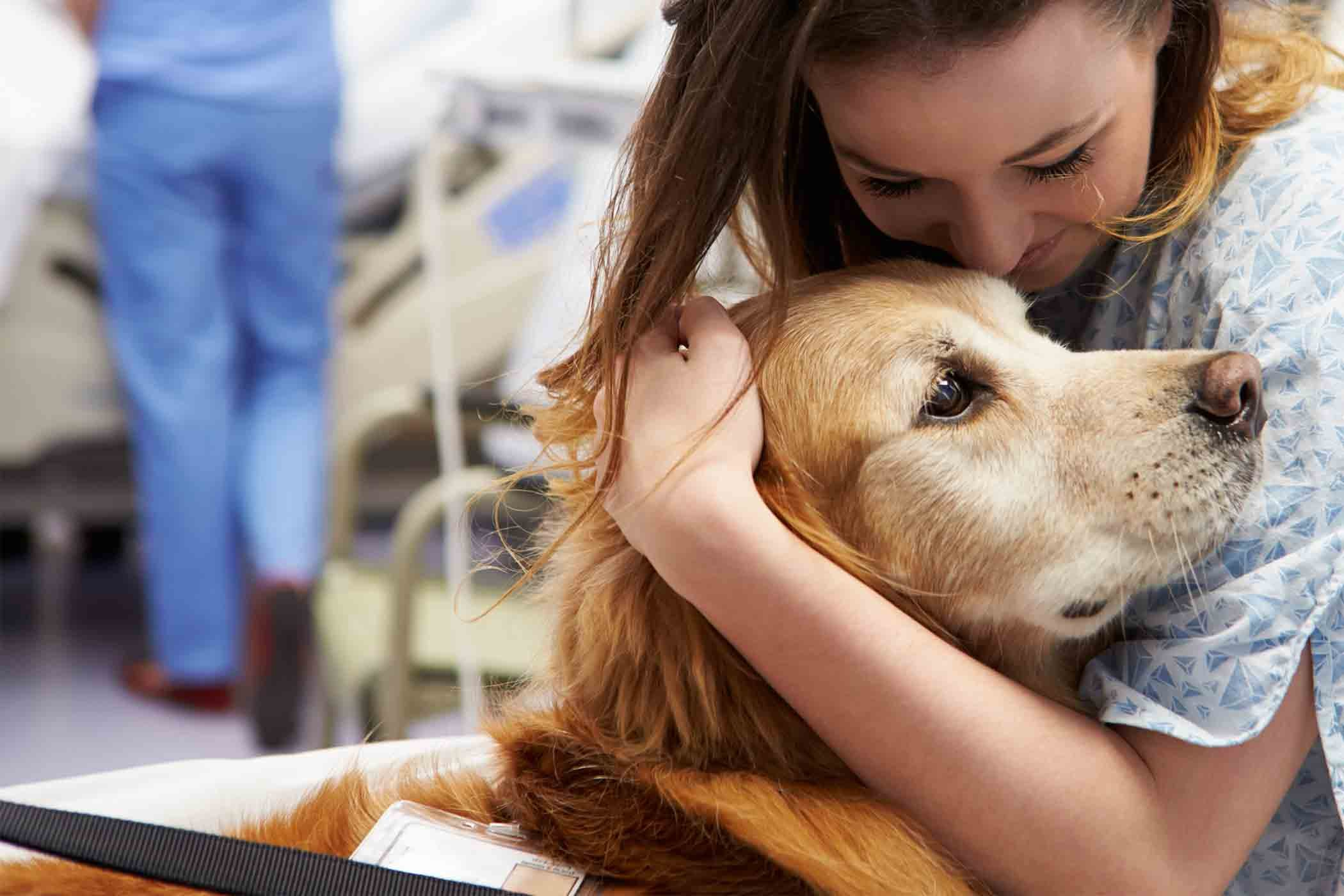 84e760c592b9 How to Train Your Dog to Become a Therapy Dog