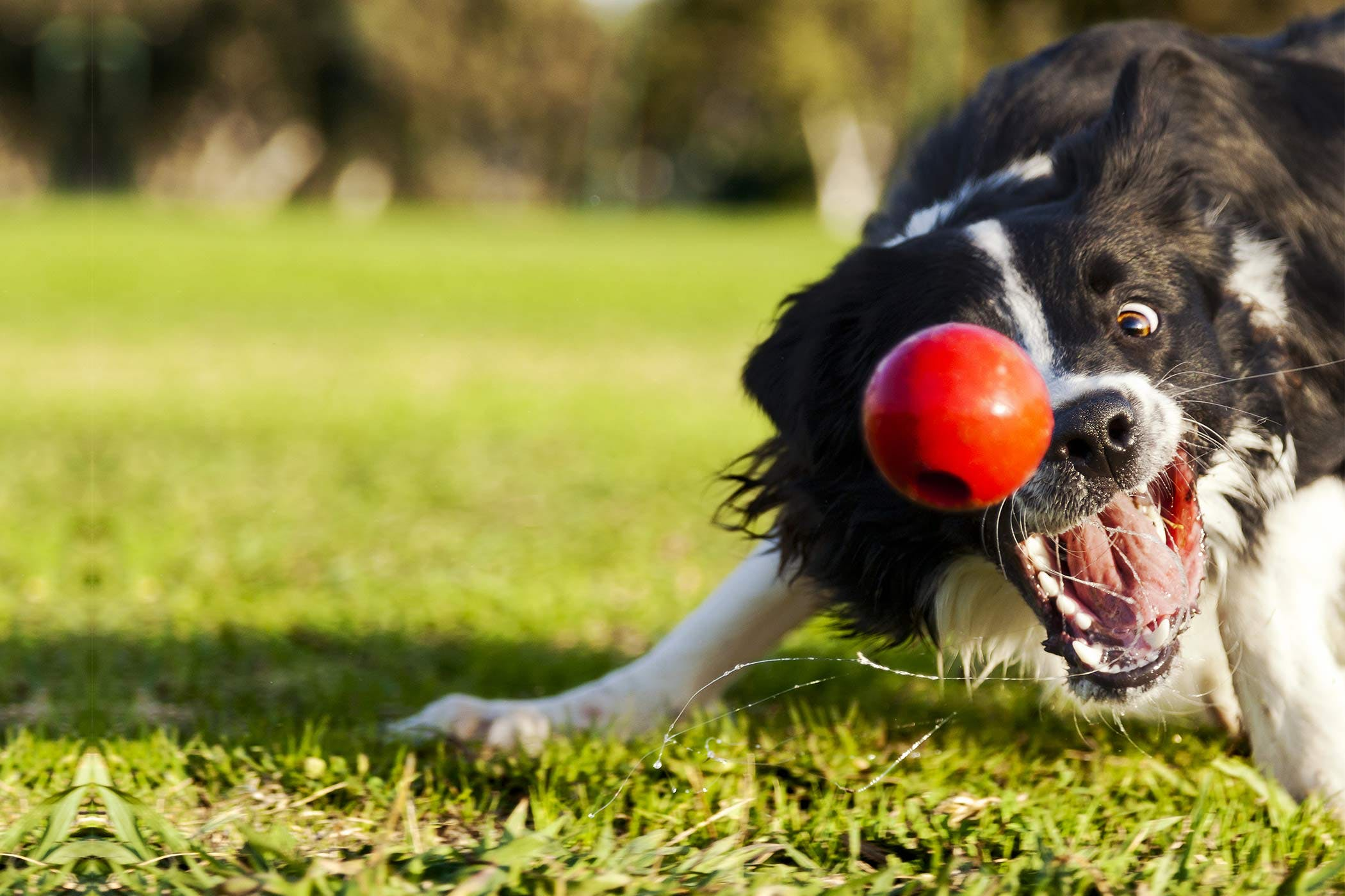 Train Your Dog To Fetch A Ball