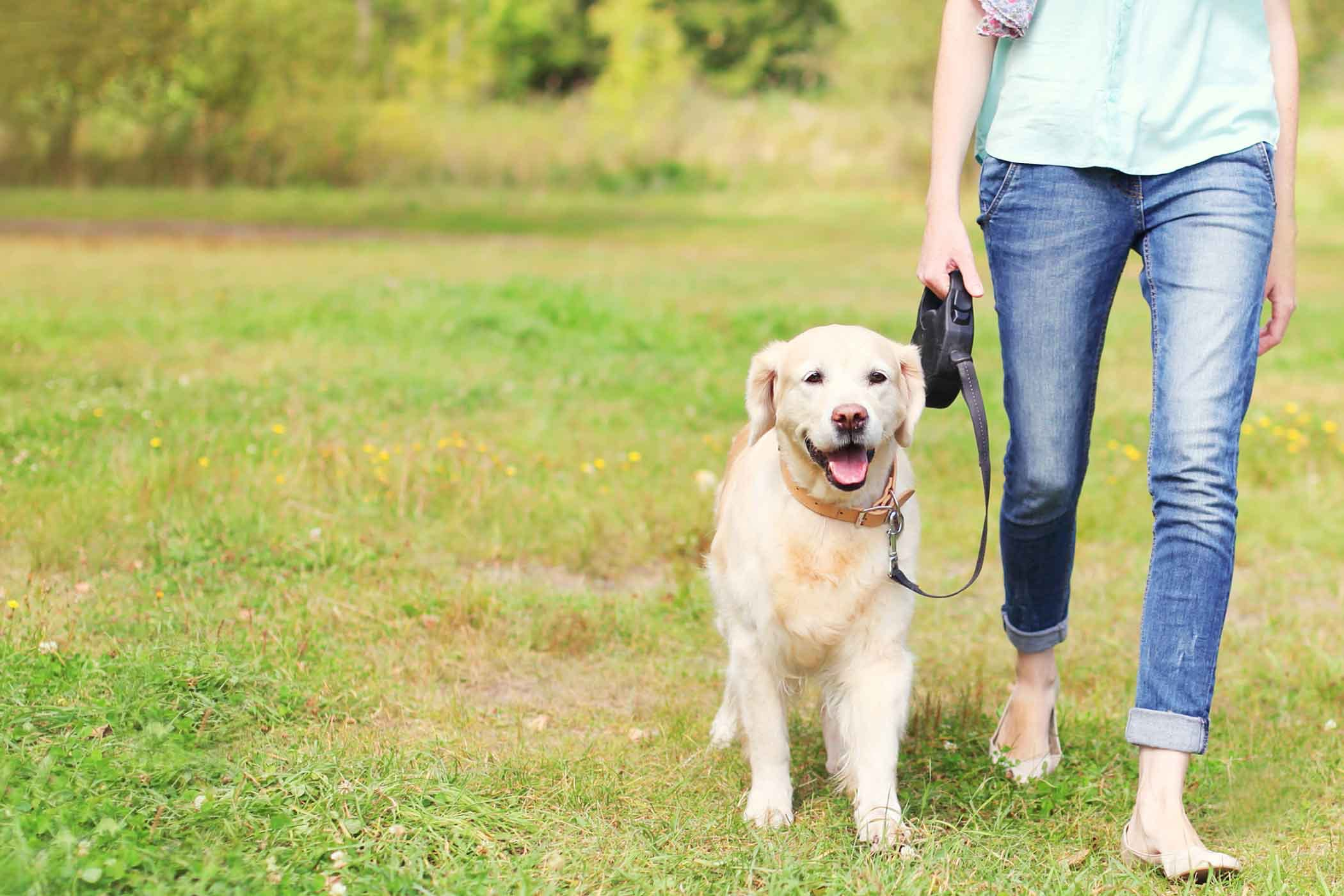 How to Train Your Dog to Heel While Walking | How To Train A Dog To Heel