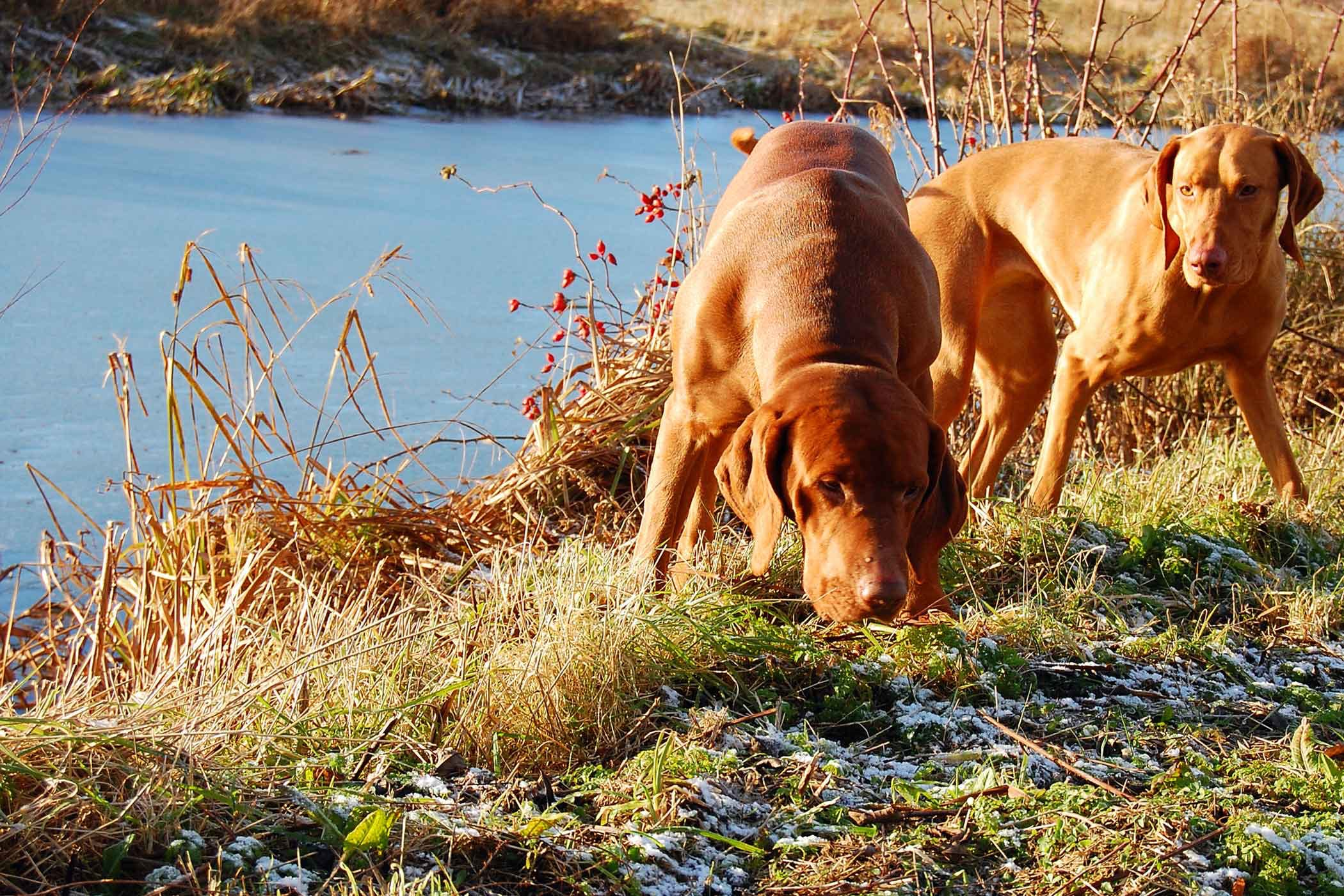 How to Train Your Dog to Hunt Gophers