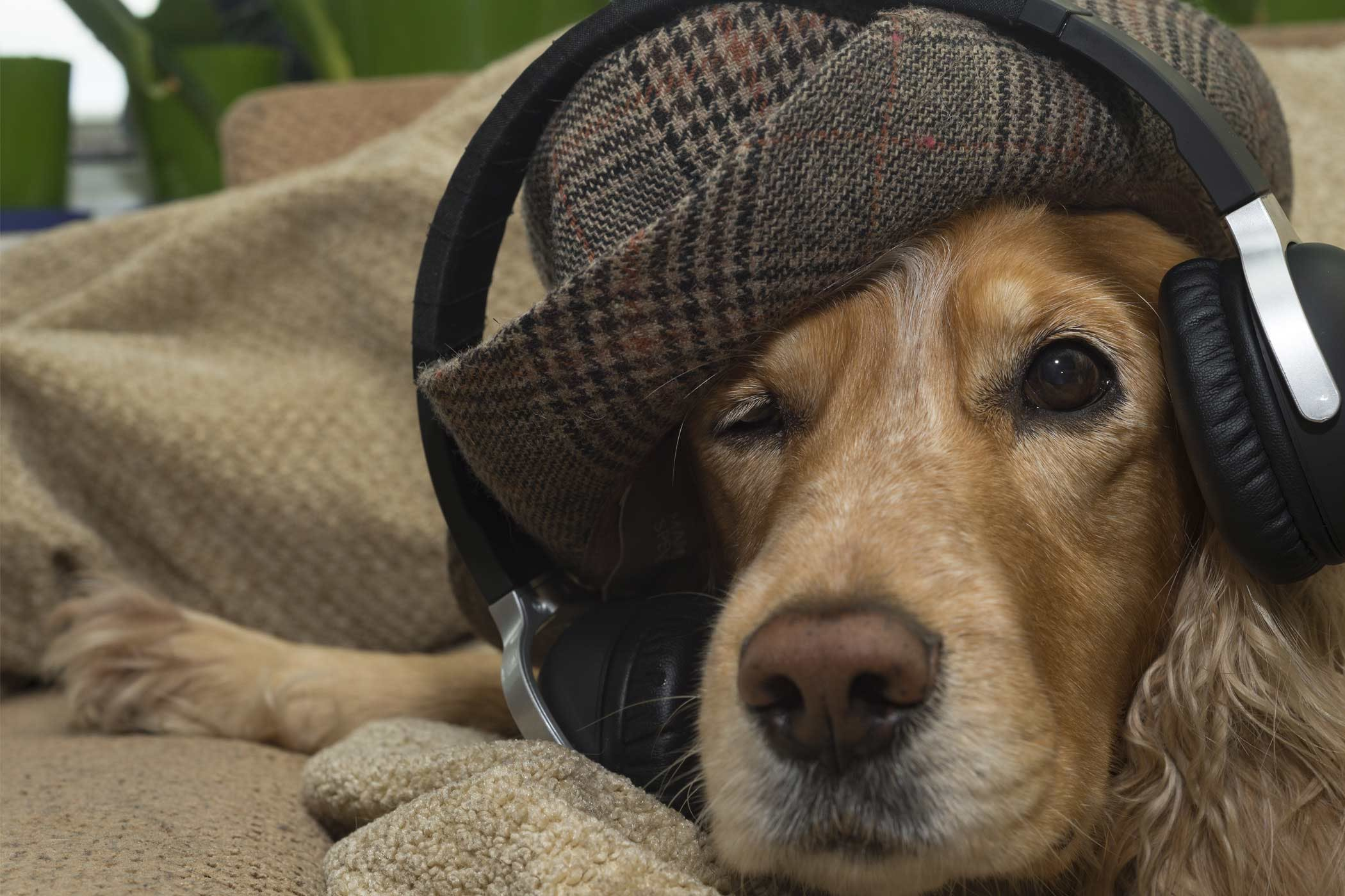 How to Train Your Dog to Ignore Loud Noises