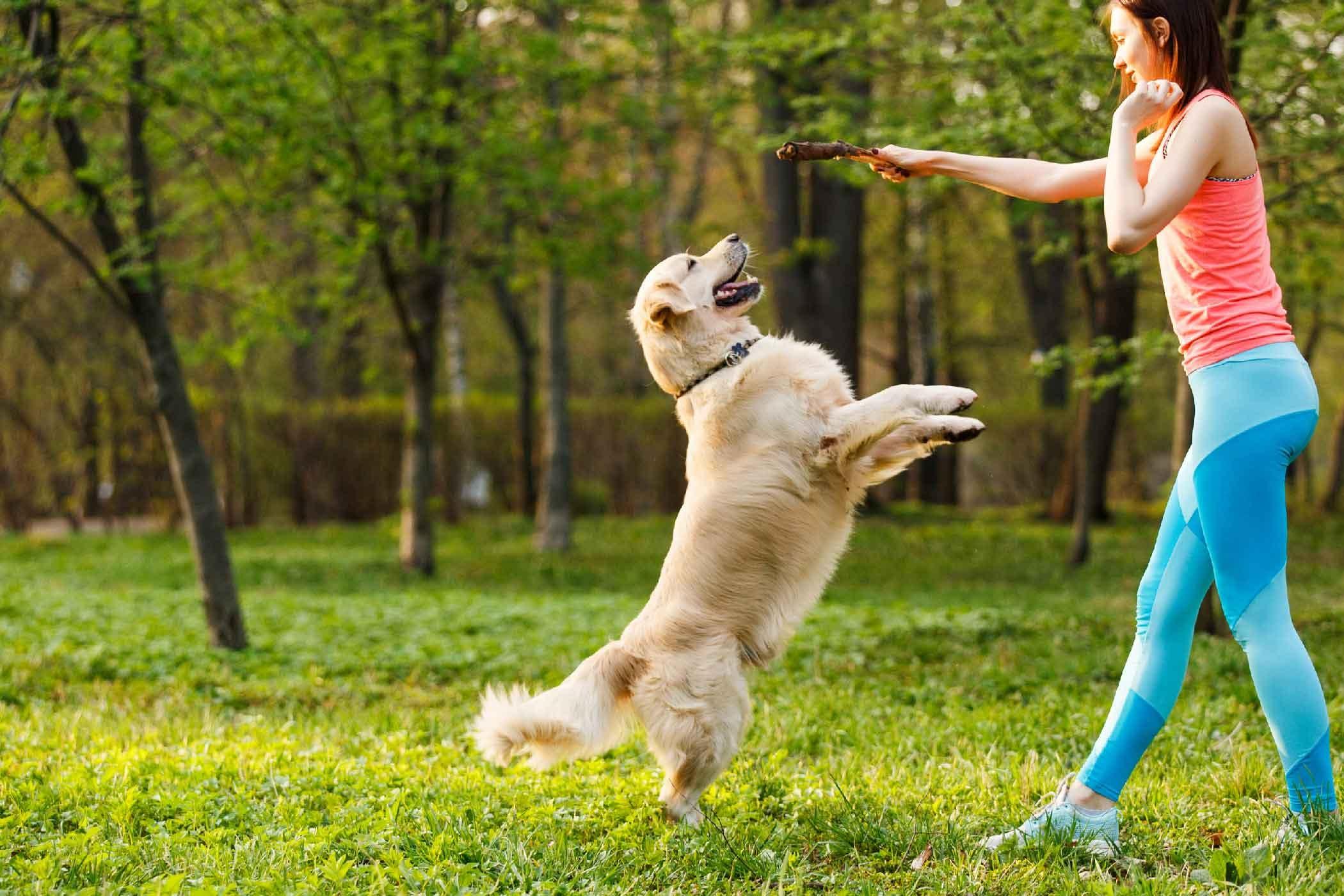 dạy chó nghe lời
