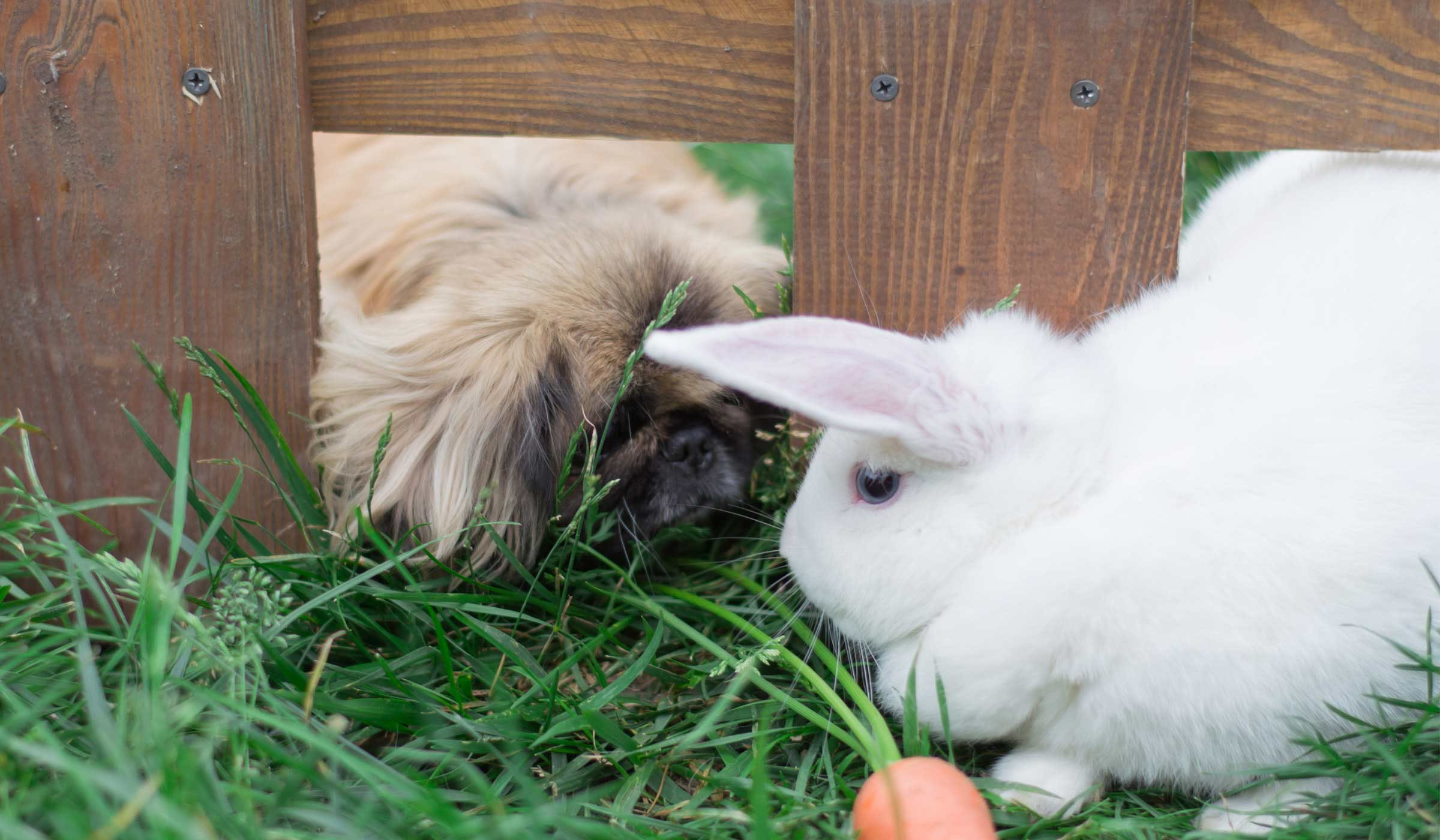 How to Train Your Small Dog to Like a Rabbit