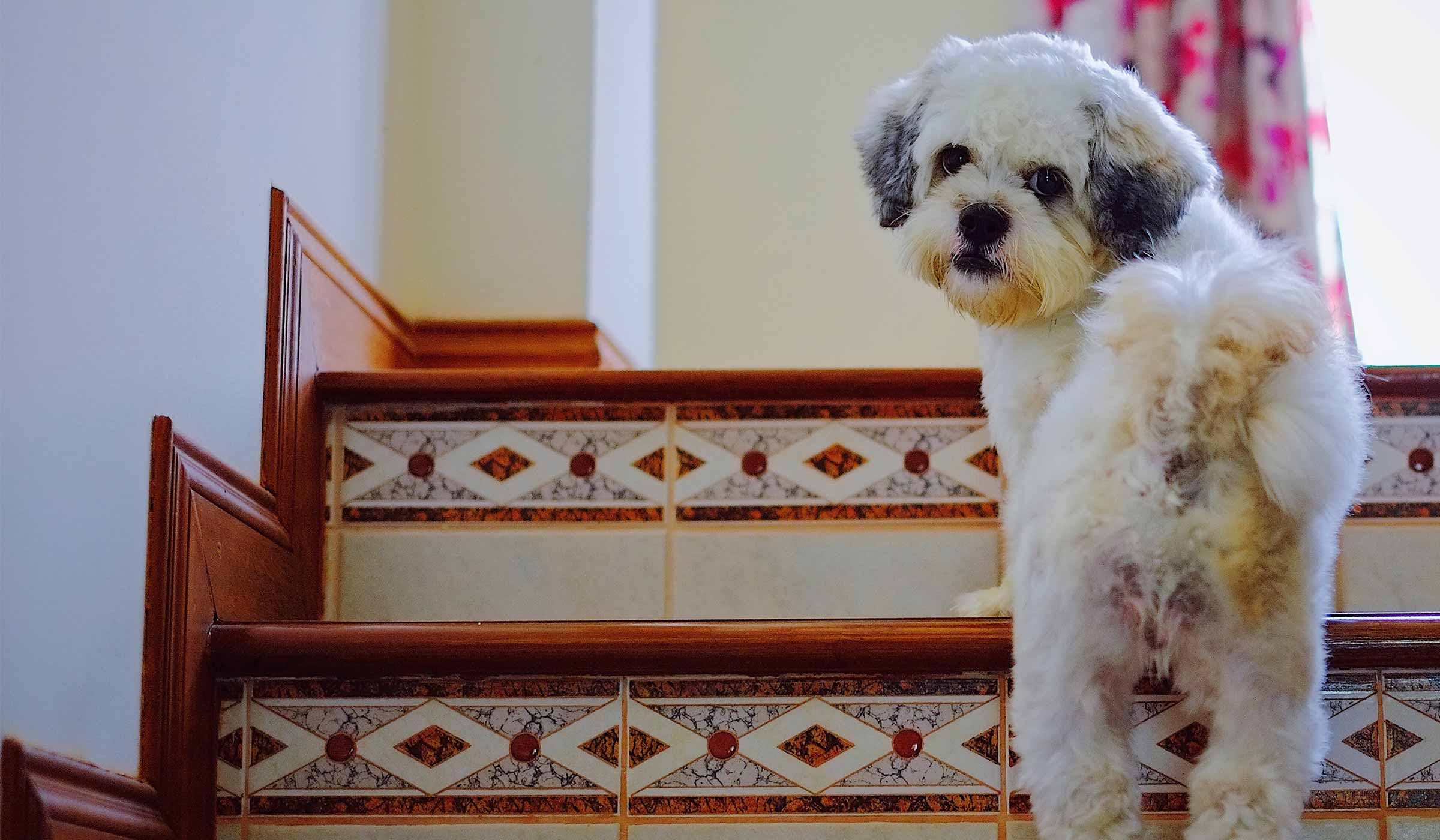 How To Train Your Dog To Not Go Upstairs