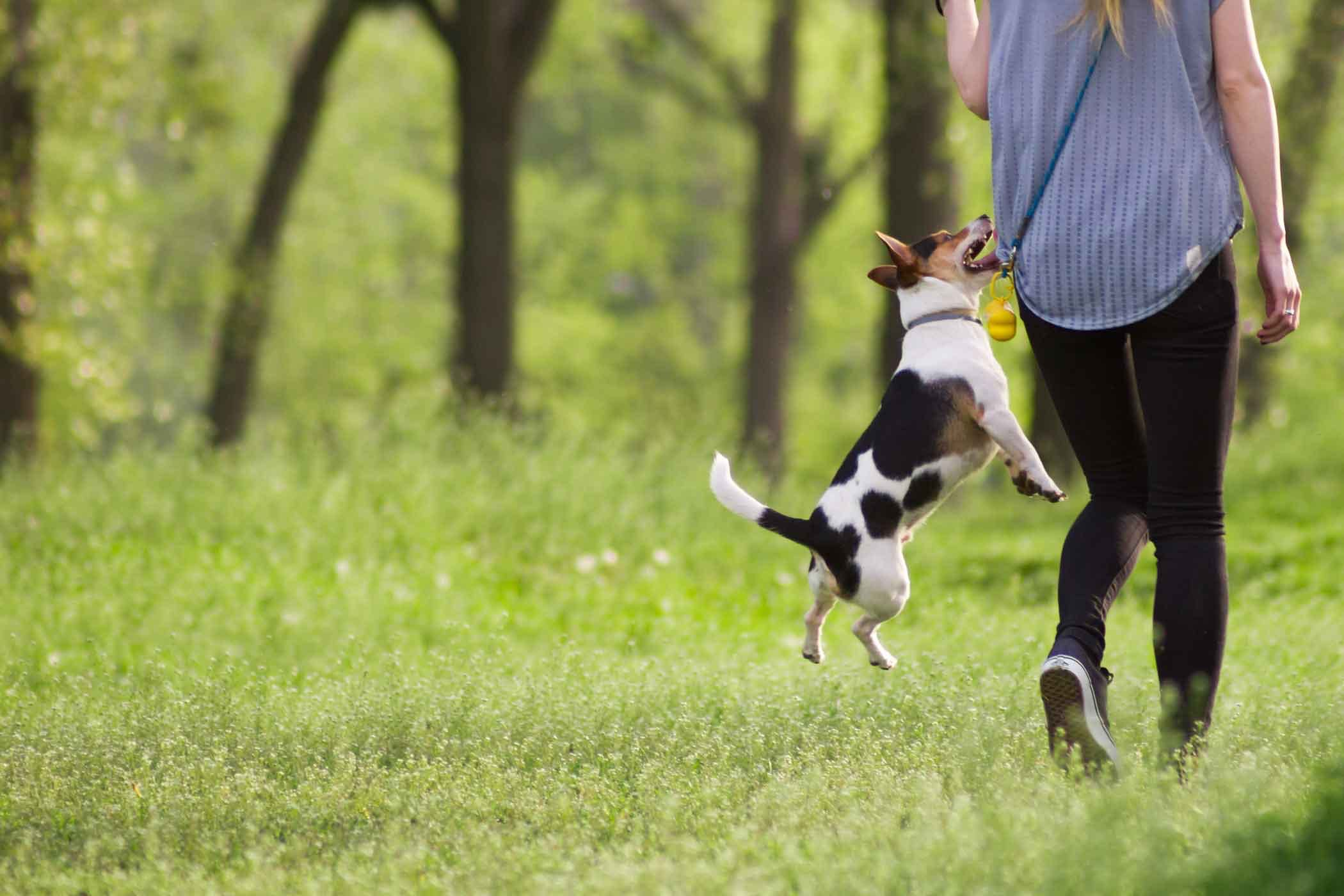 How To Train Dog Not To Bark At Guests