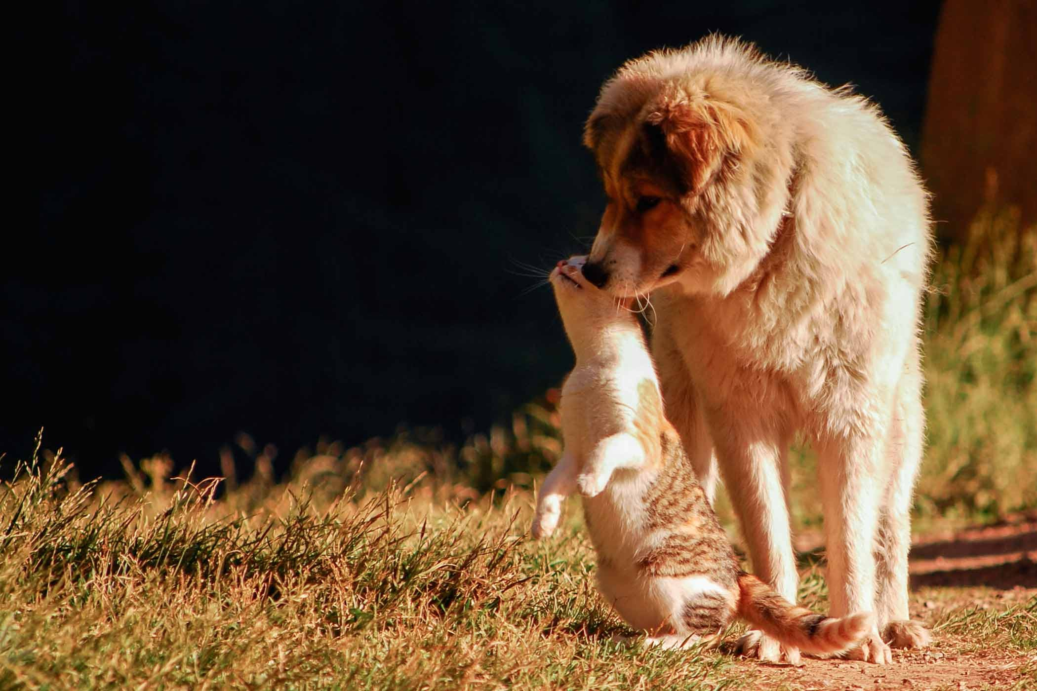 How To Train Your Dog To Not Kill Cats Wag