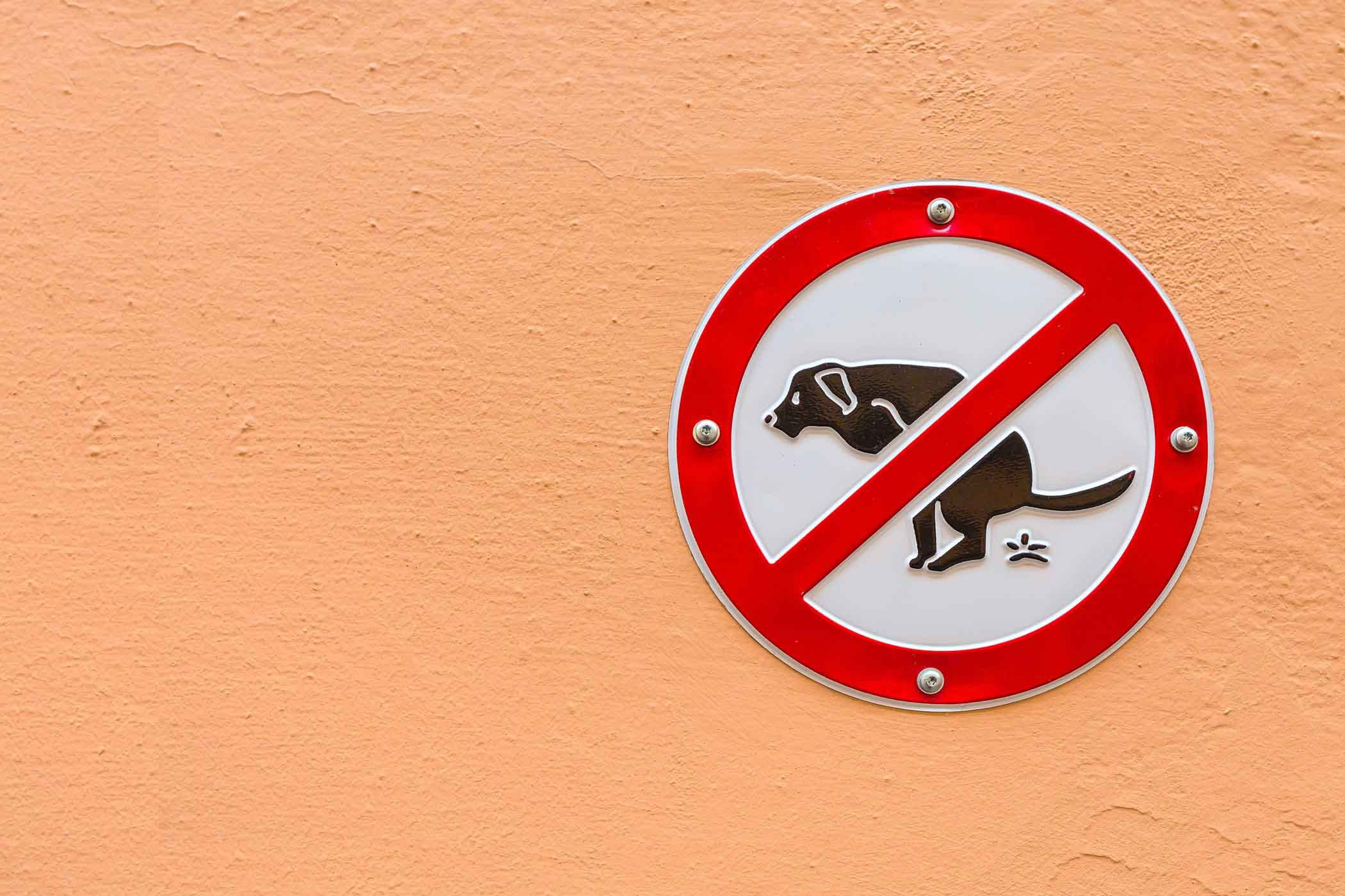 How to Train Your Older Dog to Not Poop in the House