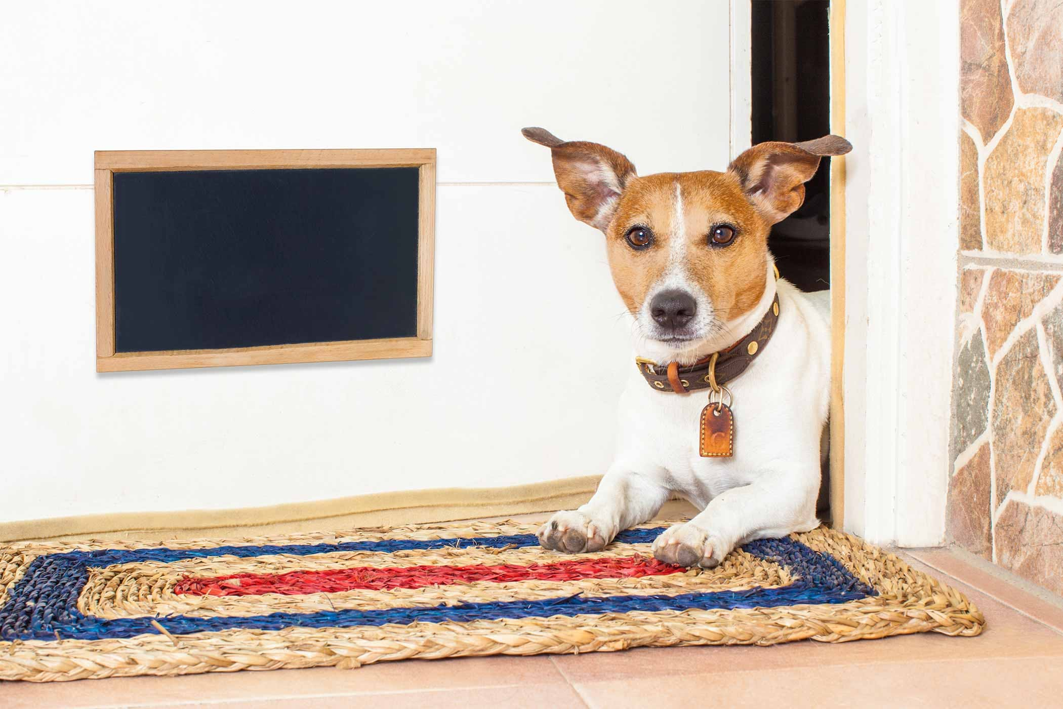 How to Train Your Dog to Not Scratch the Door