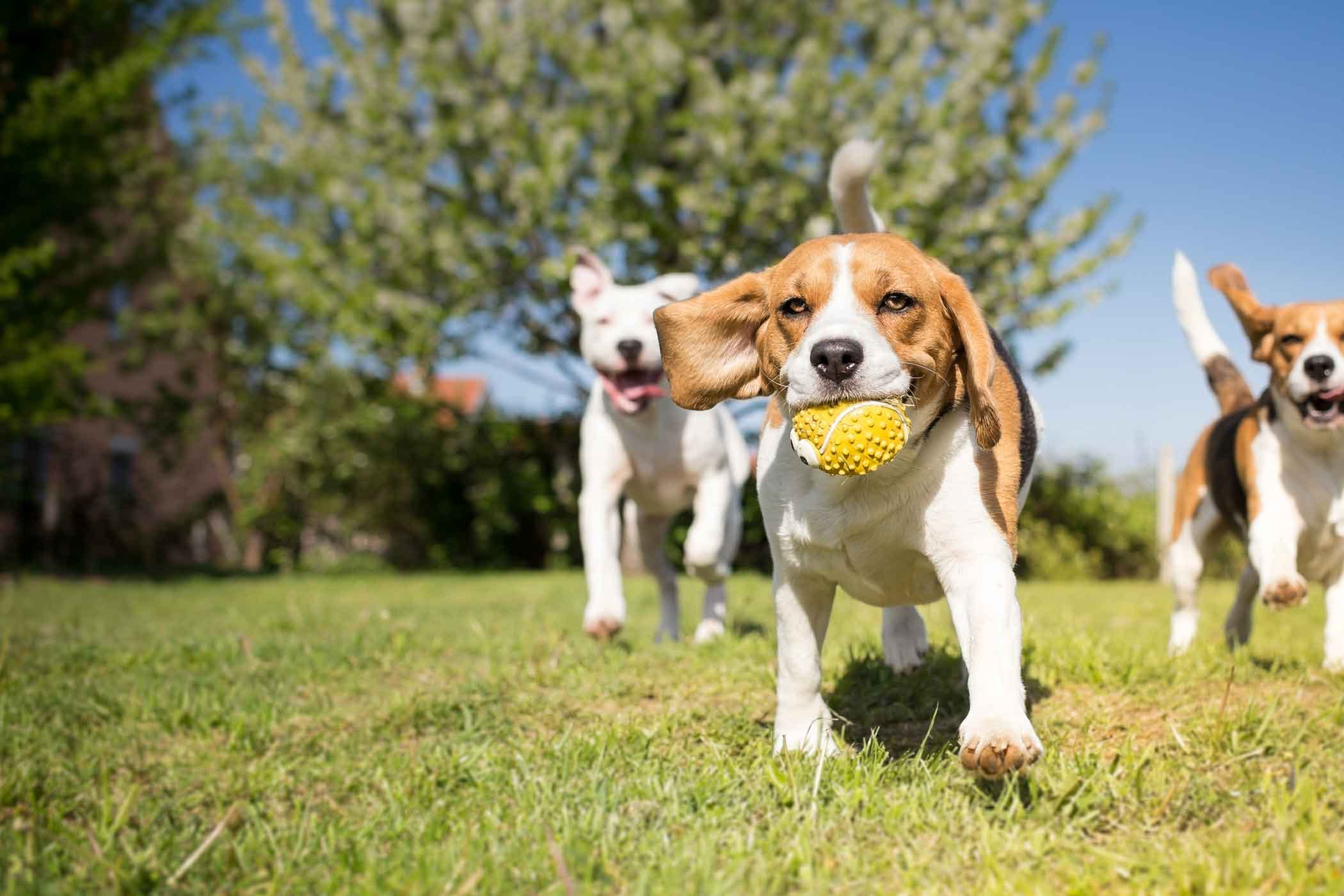 Image result for dog playing