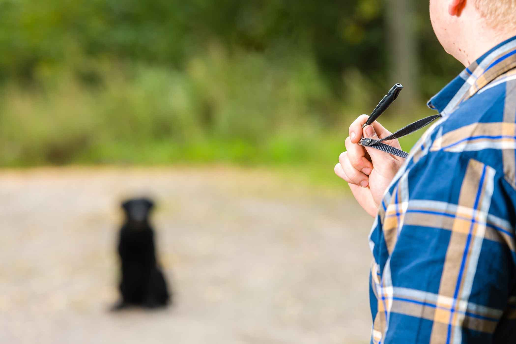 How To Train Your Dog To Respond To A Whistle