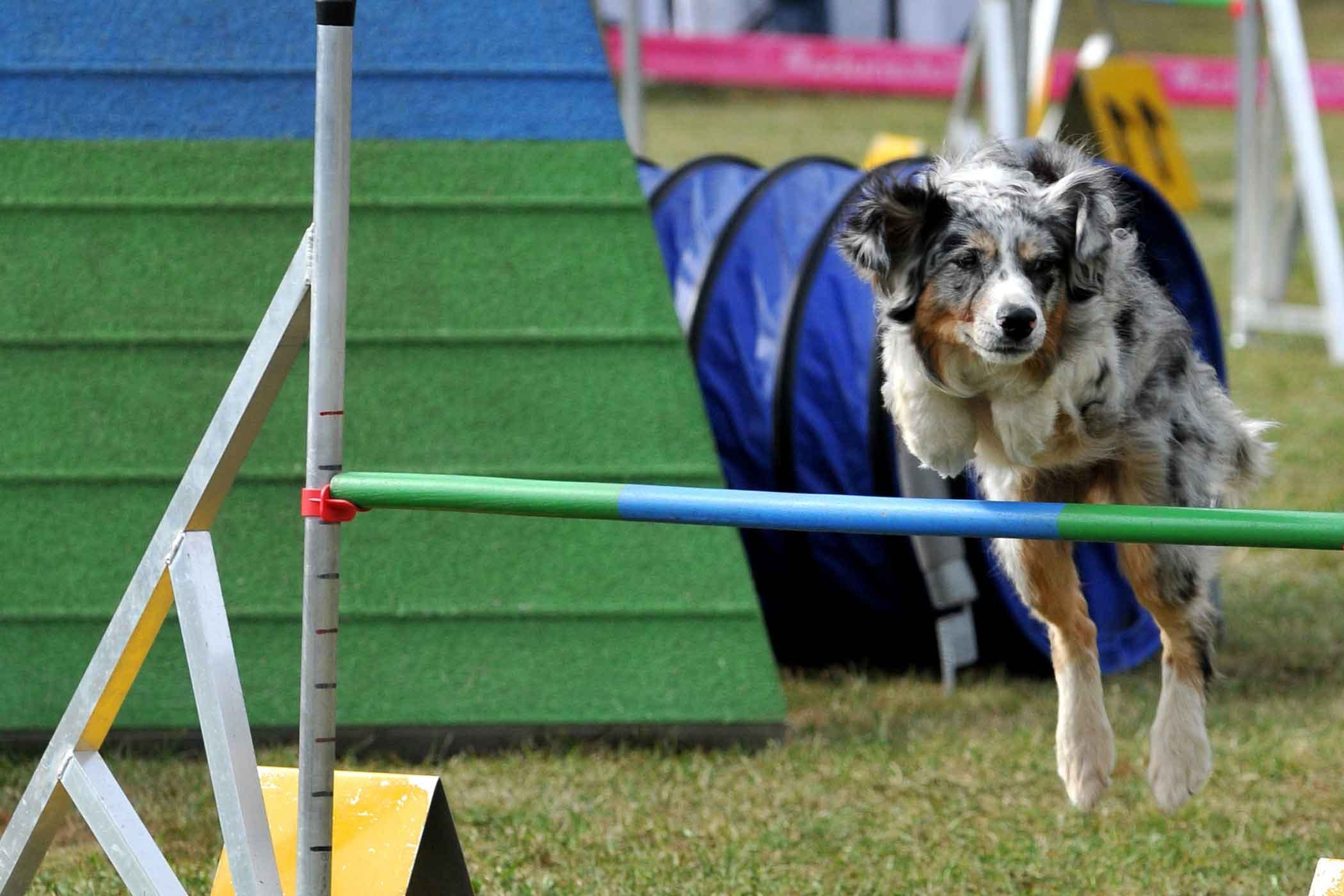 How To Train Your Dog To Run An Obstacle Course