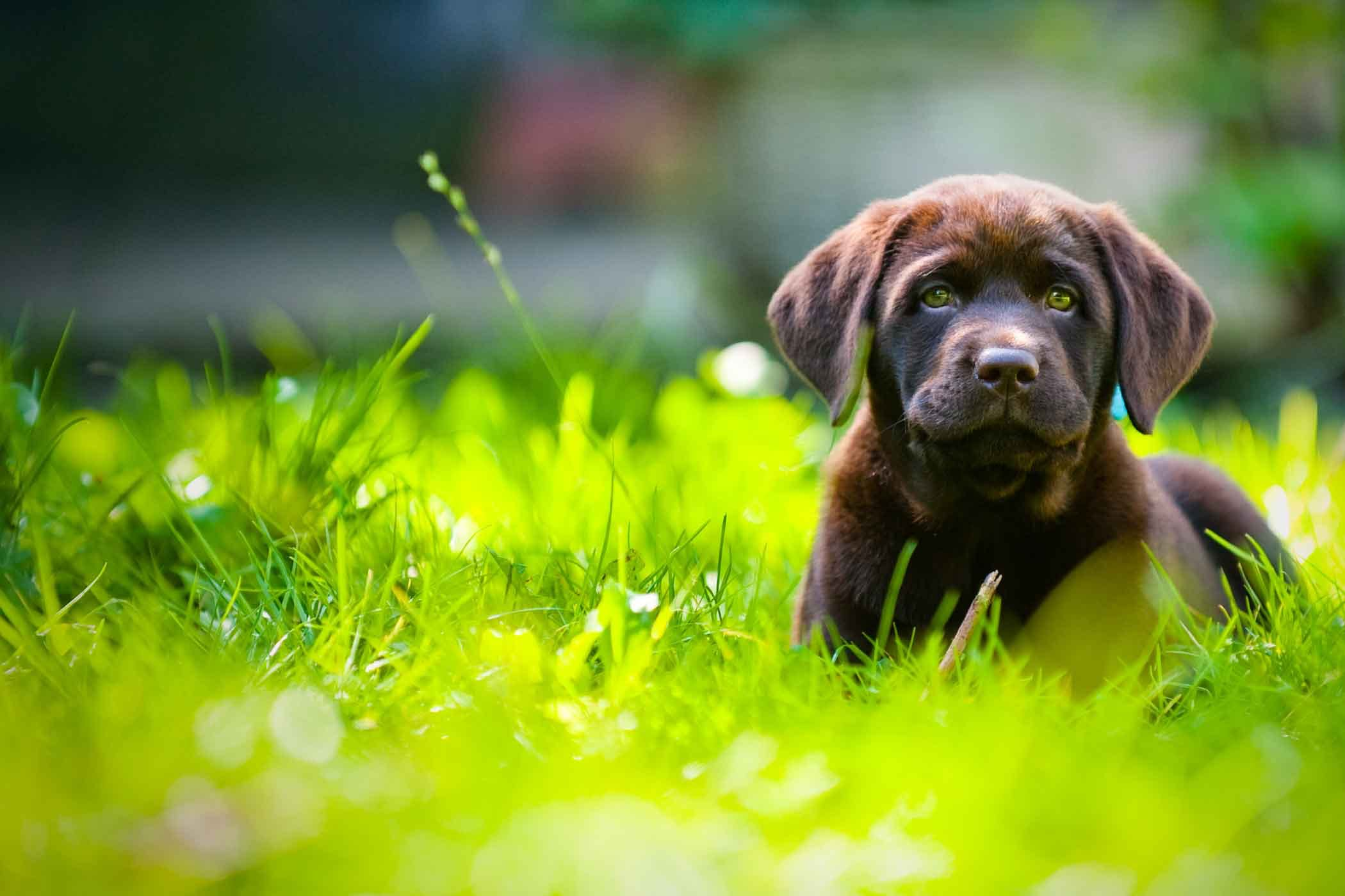 How to Train Your Dog to Stay in an Unfenced Yard | Wag!