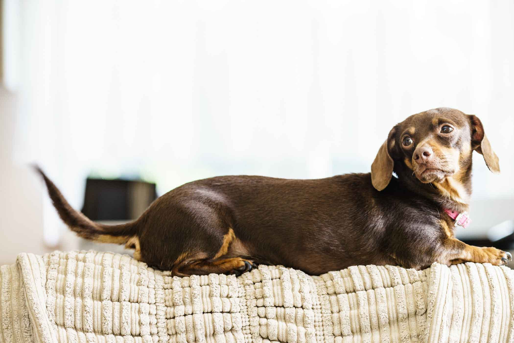 How To Train Your Dog To Stay Off The Couch Unless Invited