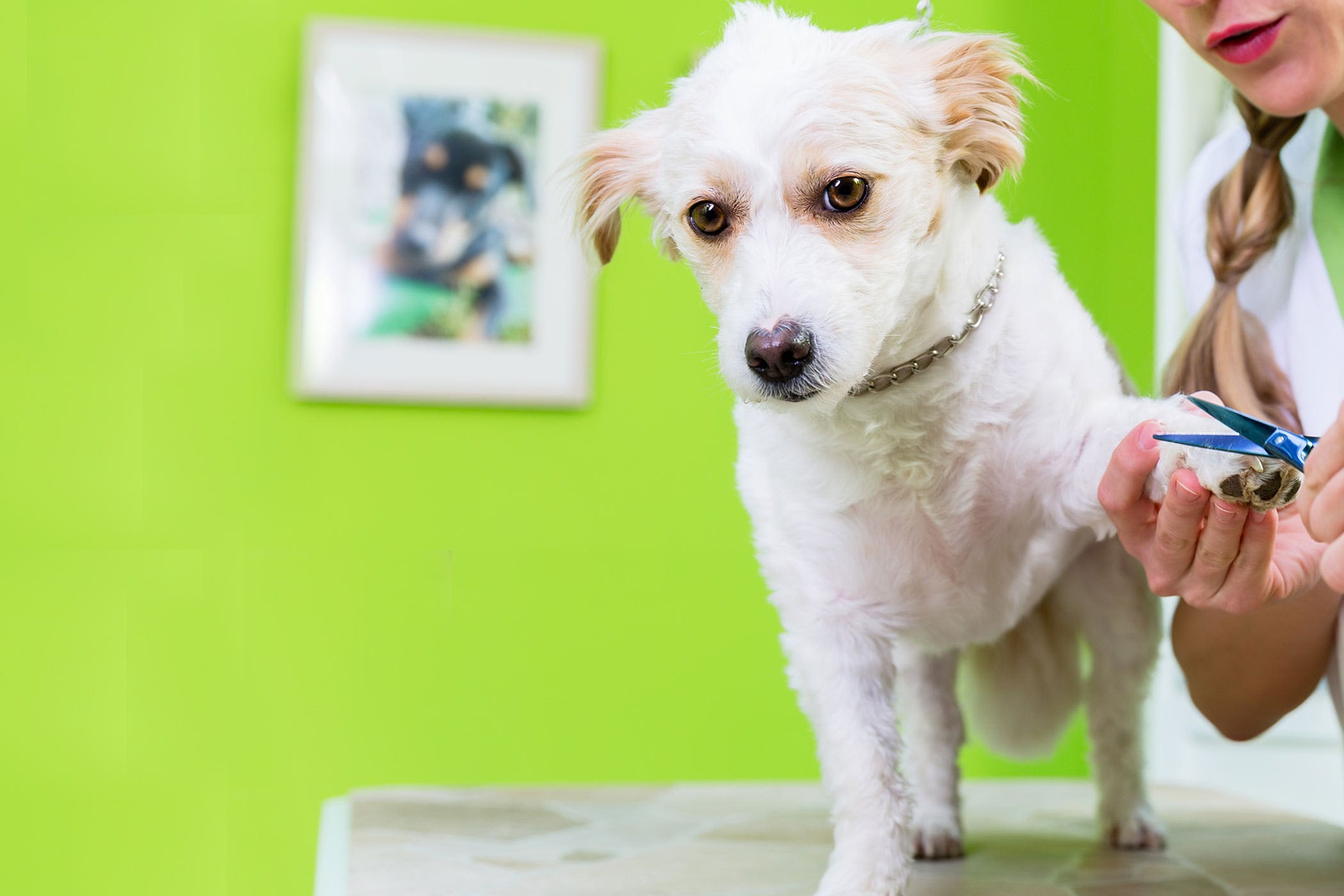 How to Train Your Dog to Stay Still While Grooming | Wag!