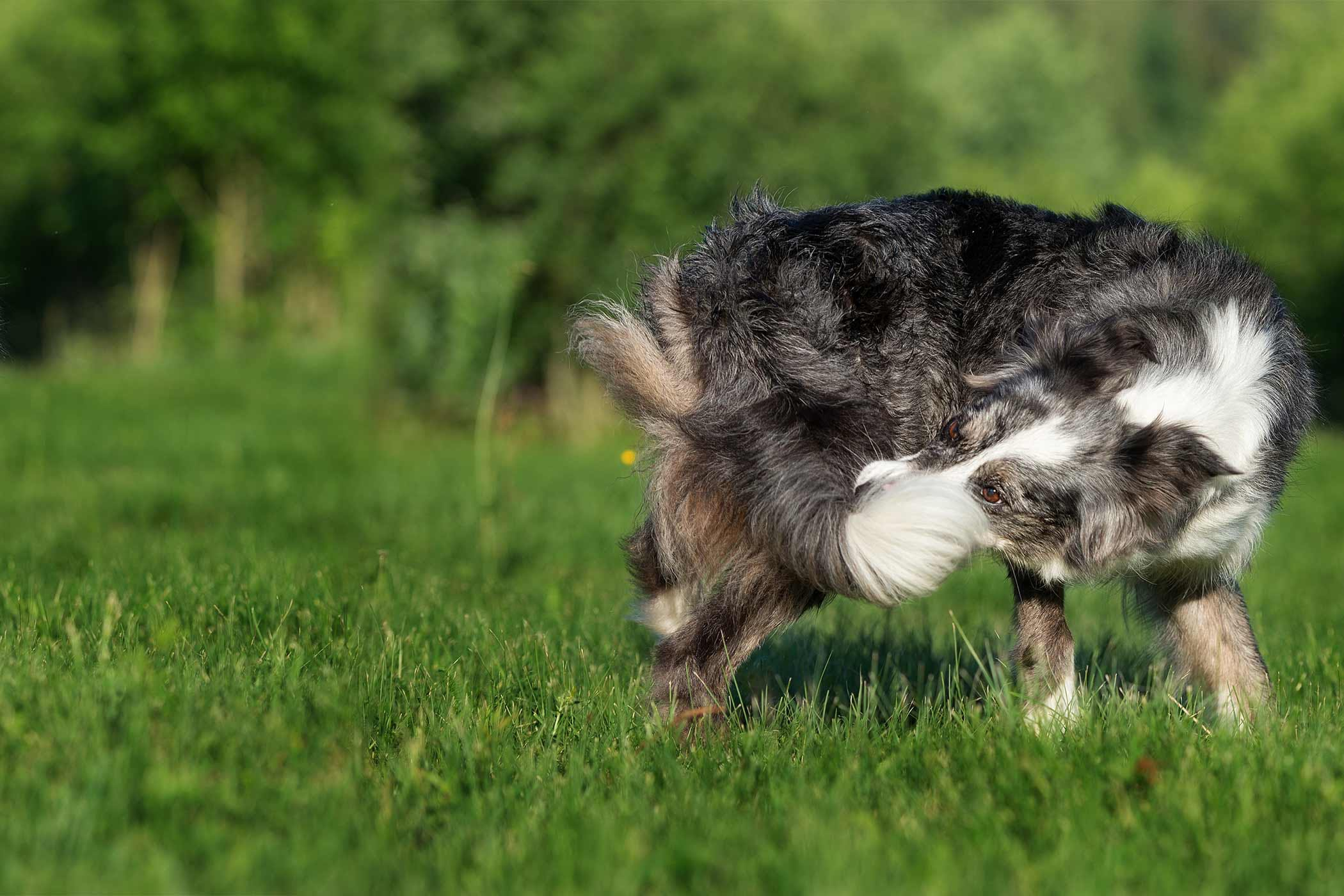 How to Train Your Dog to Stop Chasing His Tail