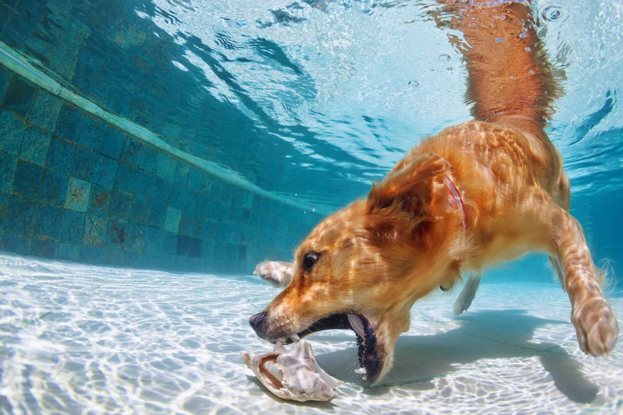 How to train your dog to swim underwater for How to train your dog to swim in the pool