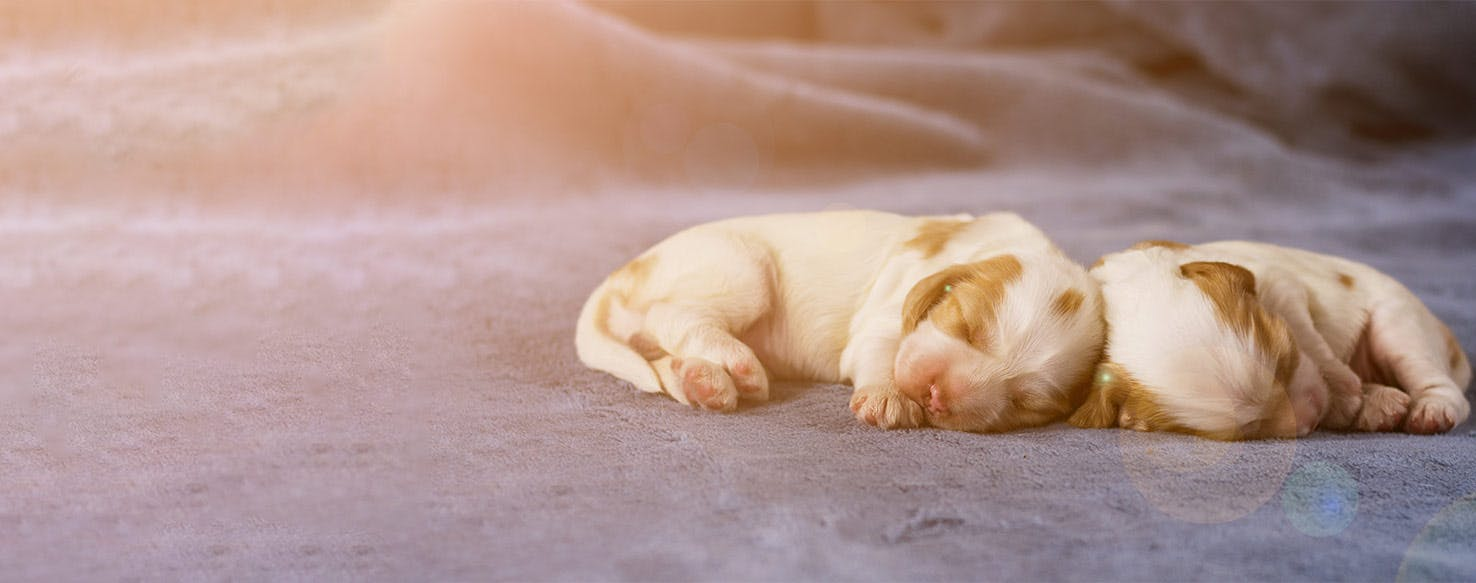 How To Train A Puppy To Sleep Through The Night