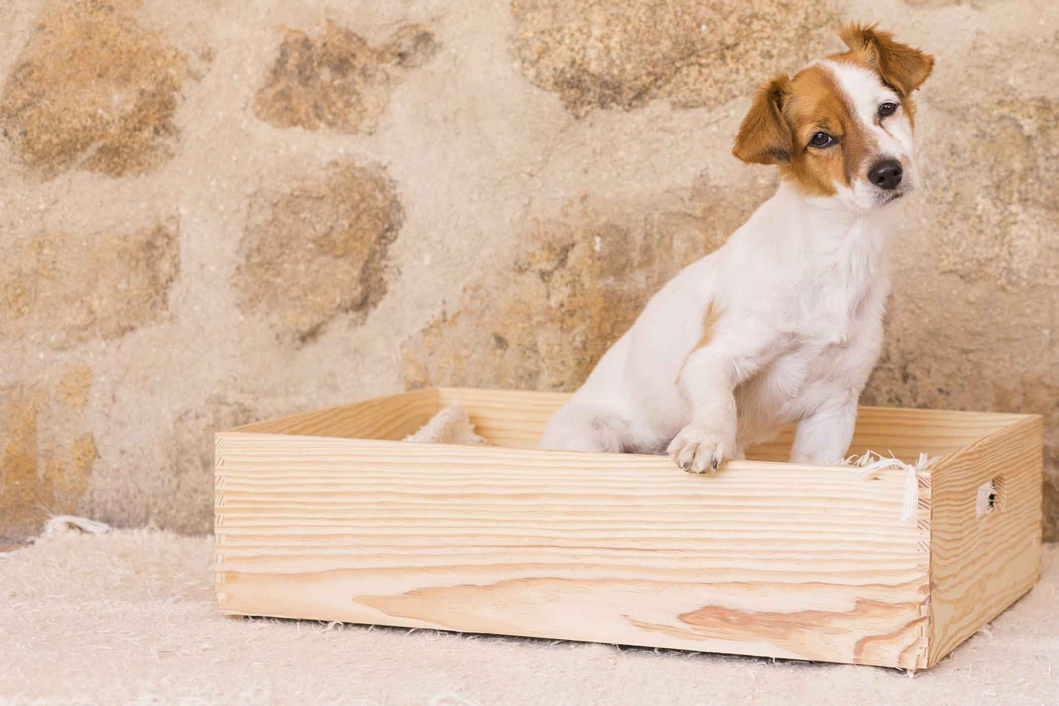 How I Trained My Dog to Use a Litter Box in One Day