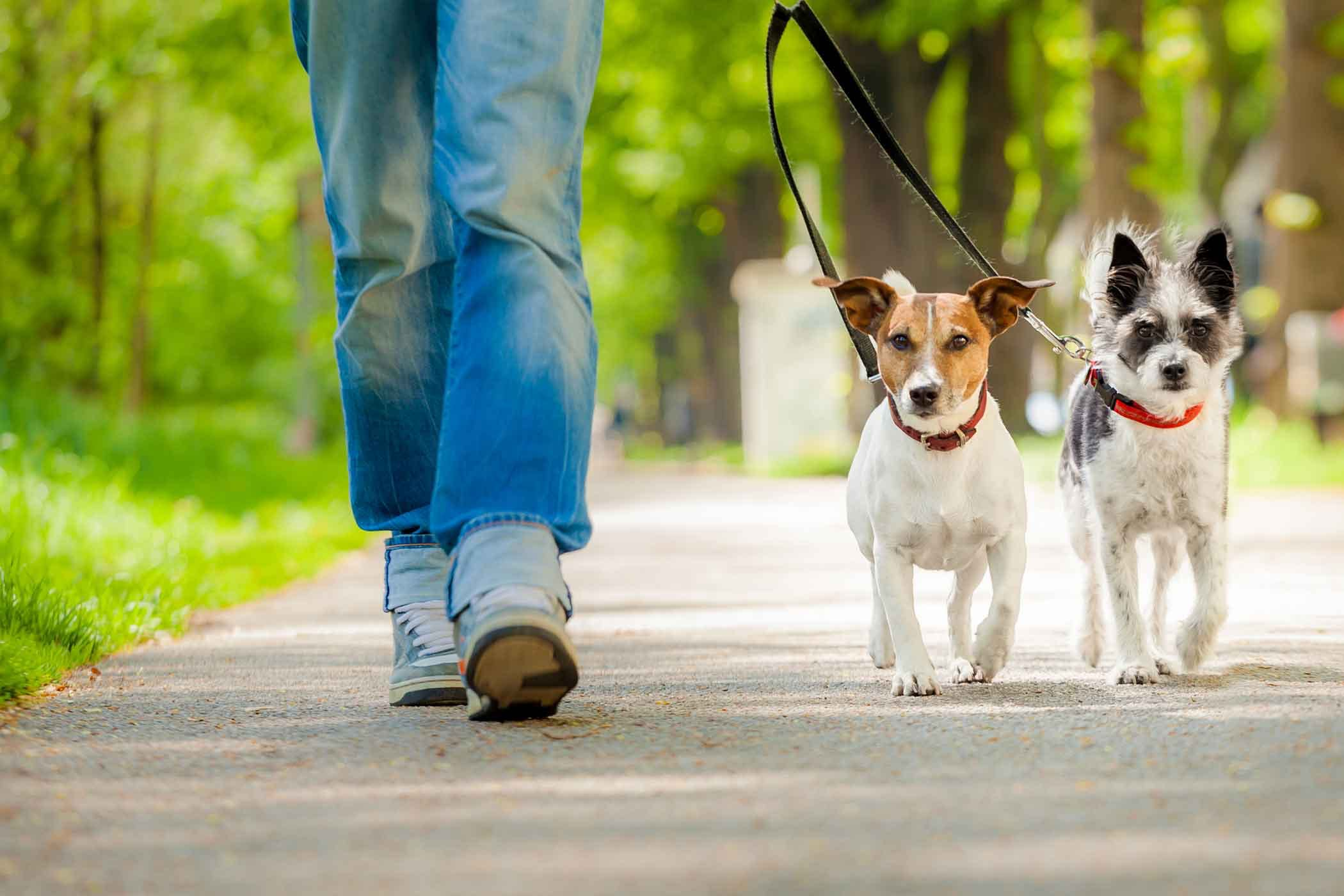 How to Train Your Dog to Walk Slowly | Wag!